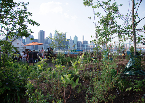 Swale is a public floating food forest in New York City on a barge, founded by Mary Mattingly to assert food as a commons. People can visit Swale to pick fresh food for free.